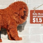 Worlds Most Expensive Dog: Tibetan Mastiff