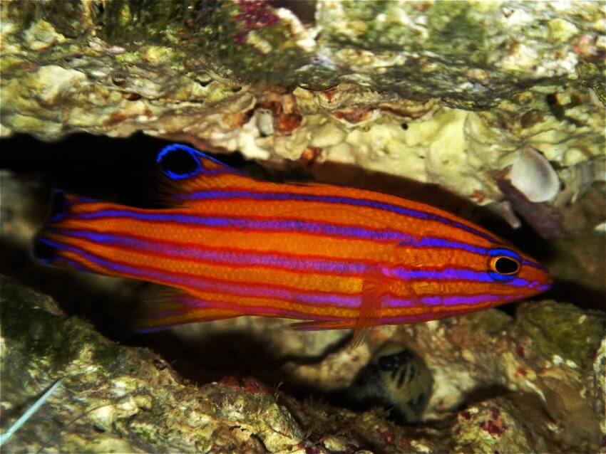Top 10 most expensive tropical fish in the world ealuxe for Best fishing in the world
