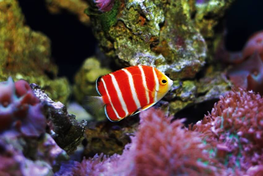top 10 most expensive tropical fish in the world ealuxe