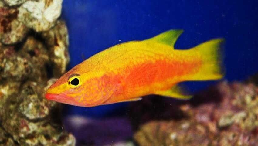 Top 10 most expensive tropical fish in the world ealuxe for Best fish in the world