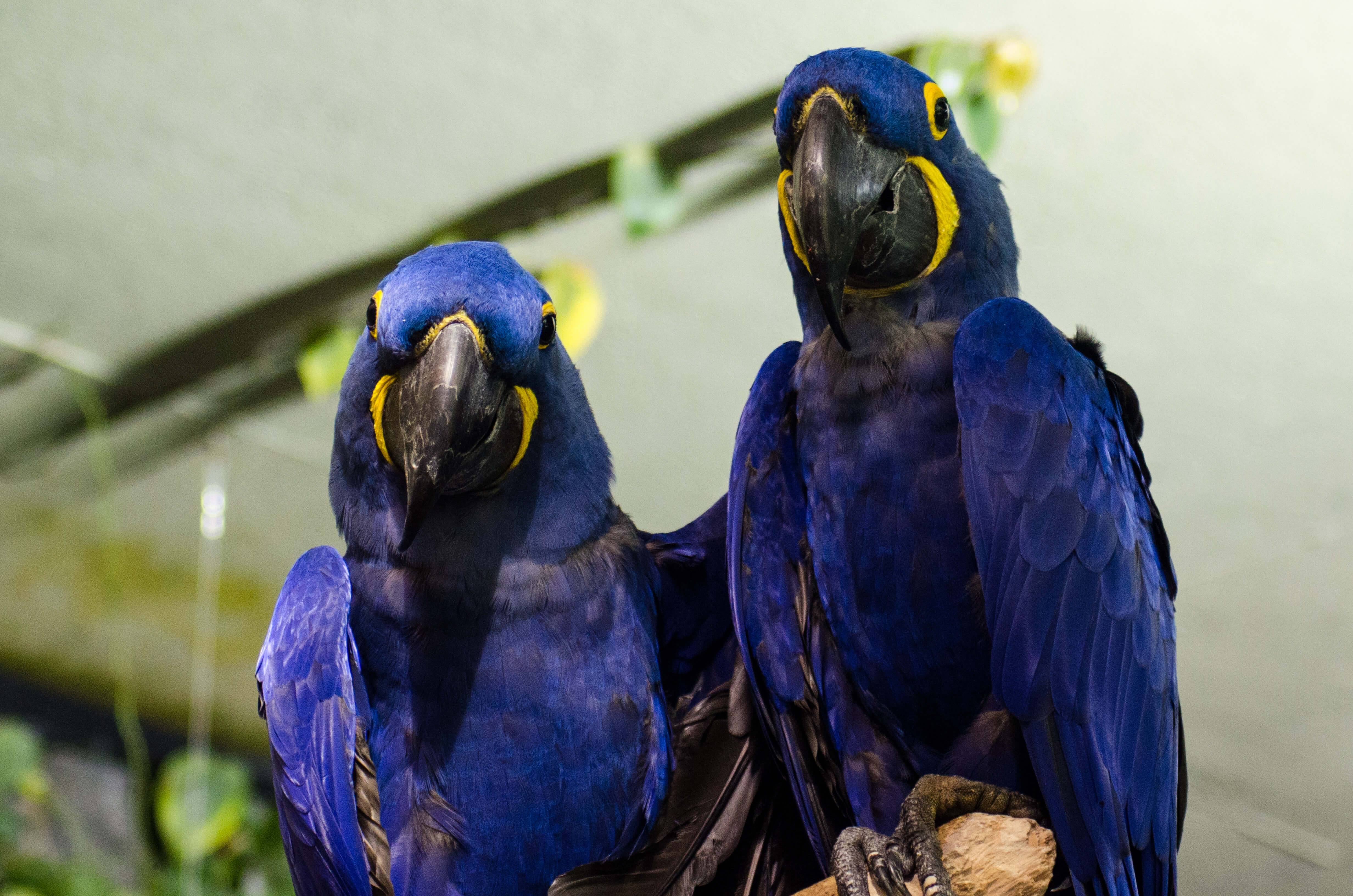 check out the most expensive parrot in the world