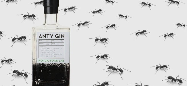Would You Taste The Gin Made From The Red Wood Ants?