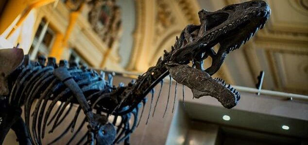 Nearly Complete Dinosaur Skeleton Sells for €1 million at French Auction