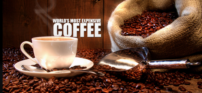 World's Most Expensive Coffee: Kopi Luwak
