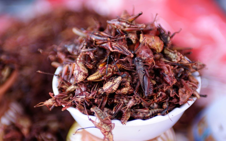 Food You Need To Try Before You Die: Grasshoppers