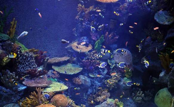Most Amazing Aquariums In The World