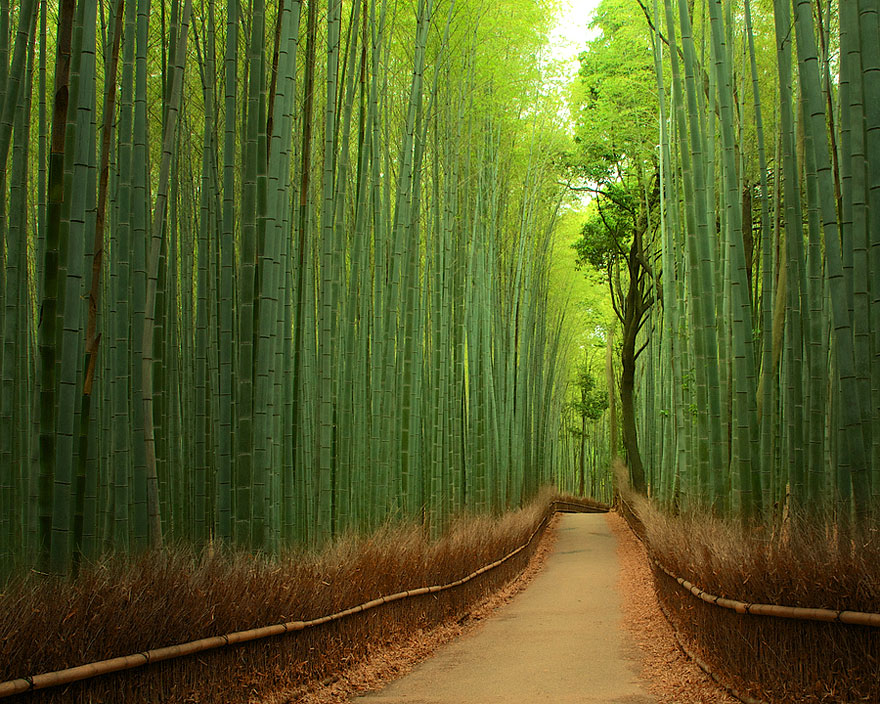 Unreal Looking Places Around The World Bamboo-Forest-China