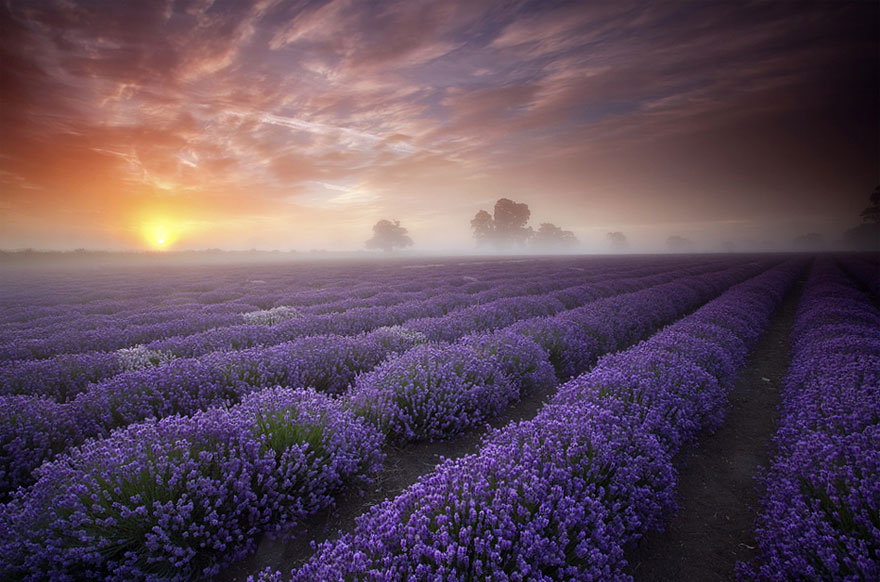 Unreal Looking Places Around The World Lavender-Fields-France