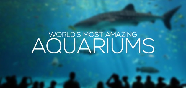 cover most amazing aquariums