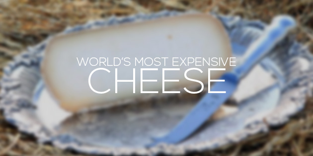 cover most expensive cheese