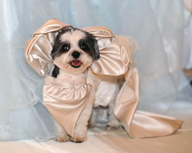 Most Expensive Dog Wedding in the World - Alux.com