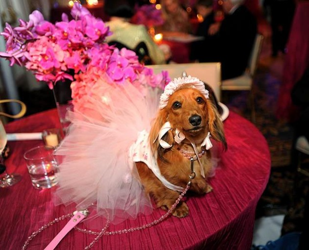 Most Expensive Dog Wedding in the World Most Expensive Pet Wedding in the World Record