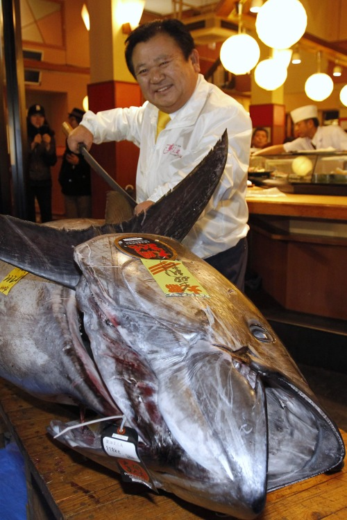 Most Expensive Fish in the World Bluefin Tuna Sold for 1.8 Million