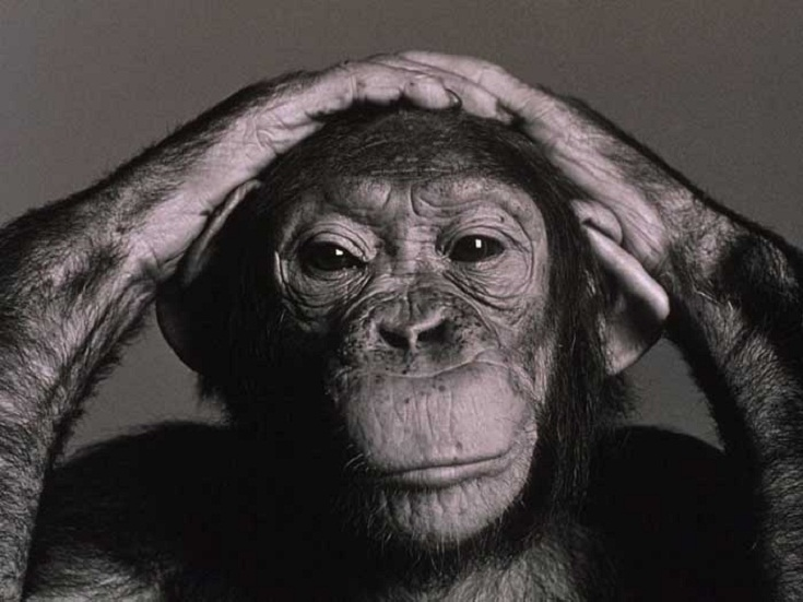 Most Expensive Pets In The World - Chimpanzee