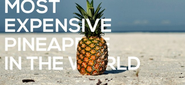 Most Expensive Pineapple In The World