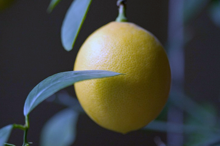 World's Most Expensive Lemons 4