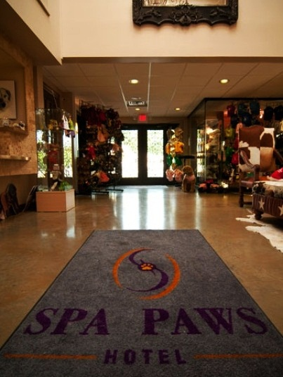 Most luxurious pet resorts for 5 paws hotel and salon