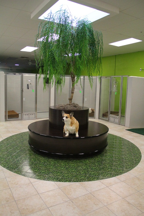 Most Luxurious Pet Resorts  Top 10 9. Bayside Pet Resort and Spa