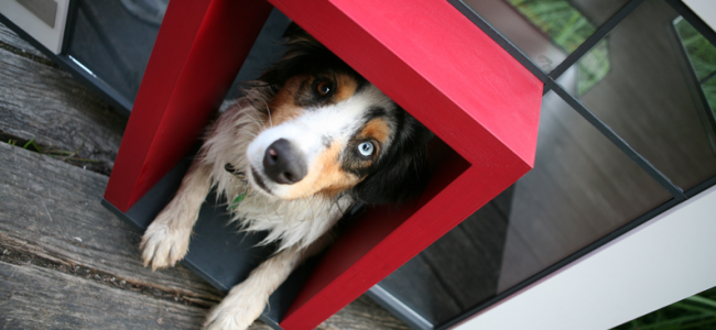 These are the 10 Most Expensive Doghouses