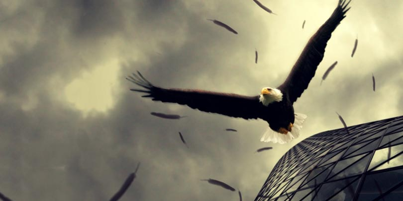 eagle escaping corporate job freedom 49 Reasons Why It Is Better To Be Rich Than Poor