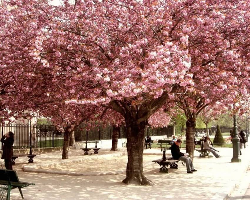 10 Beautiful Places You Have to Visit this Spring | Paris, France