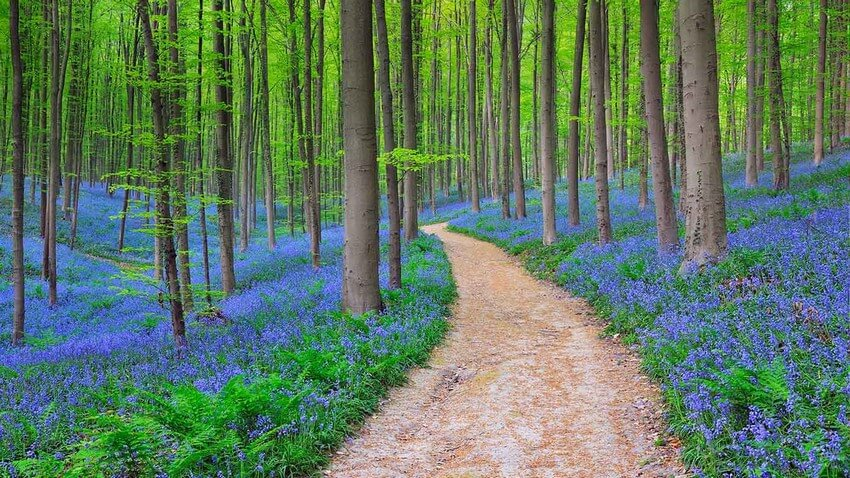 10 Beautiful Places You Have to Visit this Spring | Hallerbos Forest, Belgium