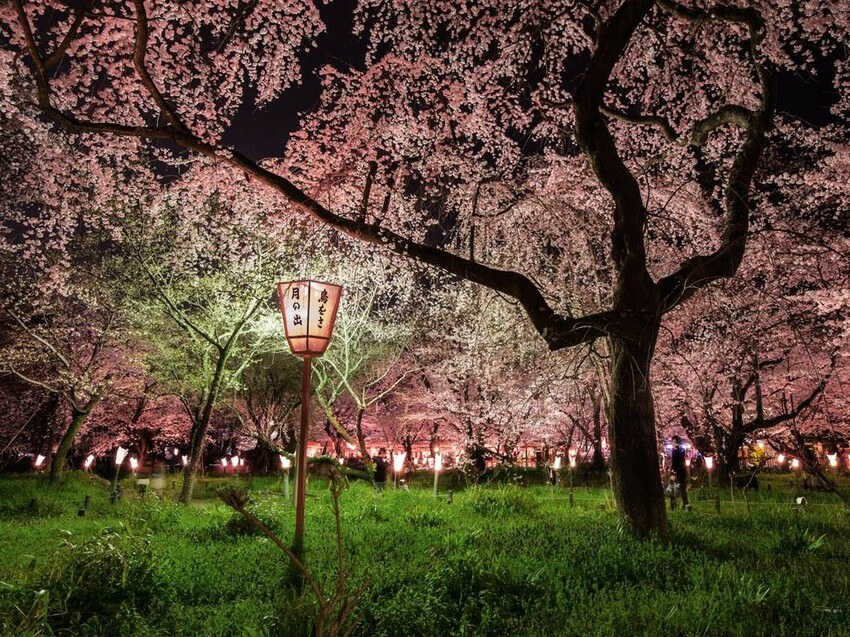 10 Beautiful Places You Have to Visit this Spring | Cherry Blossom Festival, Japan
