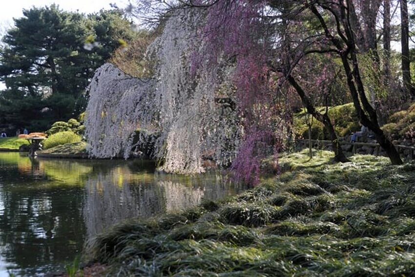 3.Brooklyn Botanic Garden | 10 Extraordinary Romantic Places in New York
