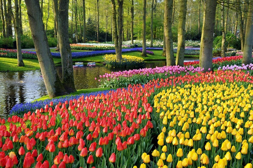 10 Beautiful Places You Have to Visit this Spring | Keukenhof Gardens, The Netherlands