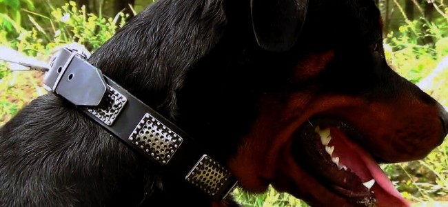 Check Out The World's First Luxury Dog Collar by Tsavari