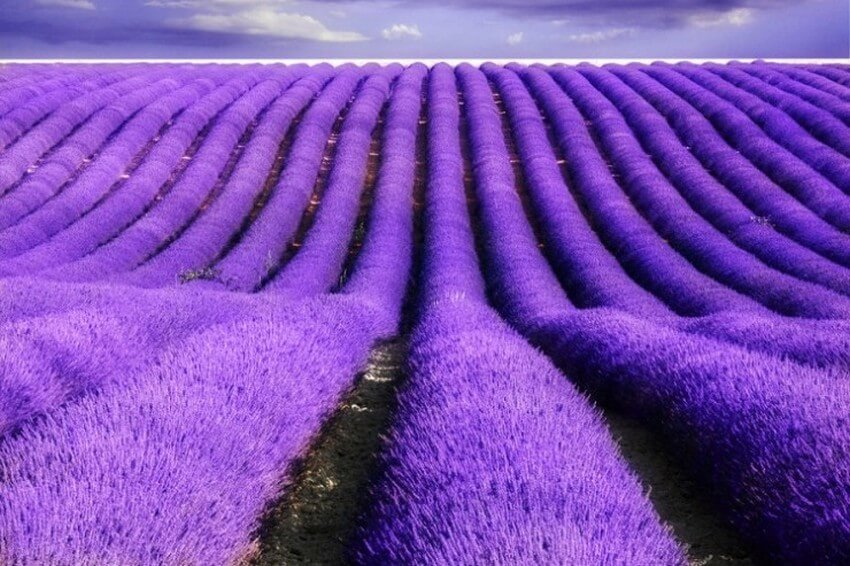 You Have to Visit These Marvelous Places to Believe They Actually Exist | Lavender Fields, France