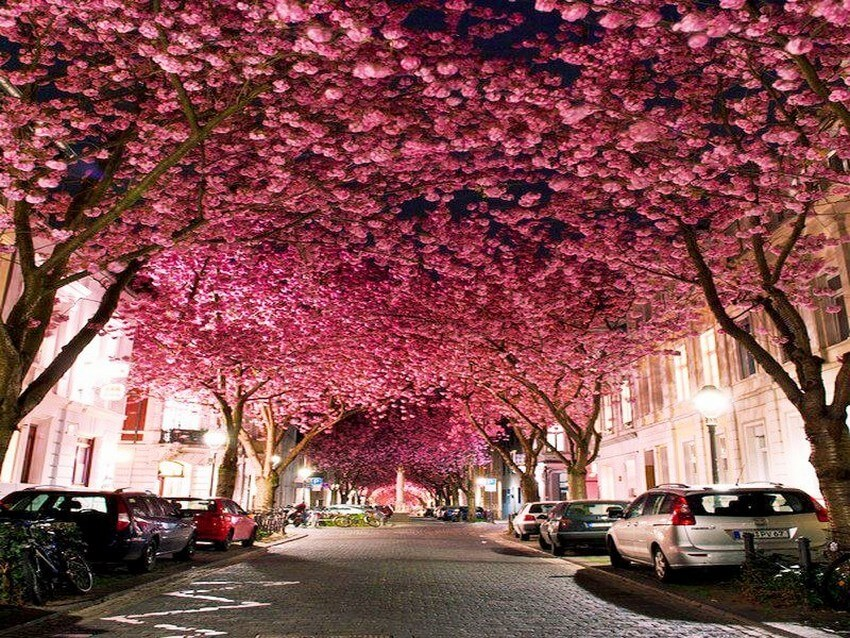 You Have to Visit These Marvelous Places to Believe They Actually Exist | Cherry Blossoms, Germany