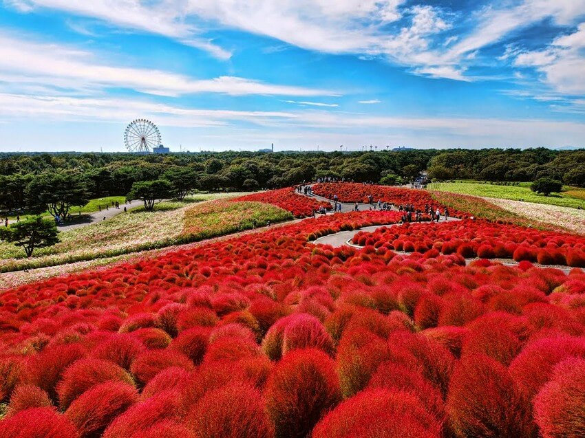 You Have to Visit These Marvelous Places to Believe They Actually Exist | Hitachi Seaside Park, Japan