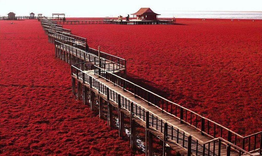 You Have to Visit These Marvelous Places to Believe They Actually Exist | Red Seabeach, China