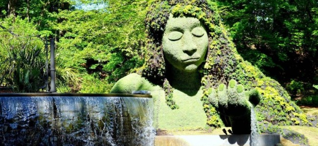 Step Into the Best Botanical Gardens in the United States!