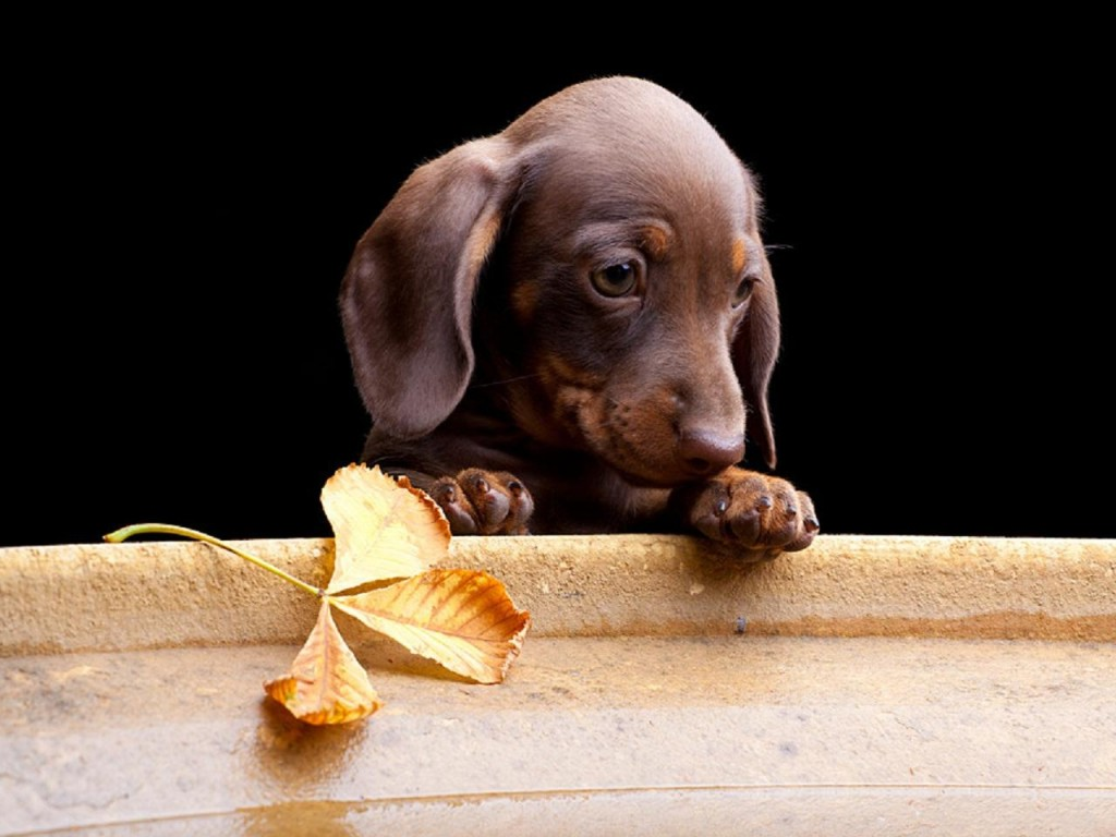 These Are The Most Adorable Dog Photos On The Internet - 29 cutest dog photos existence