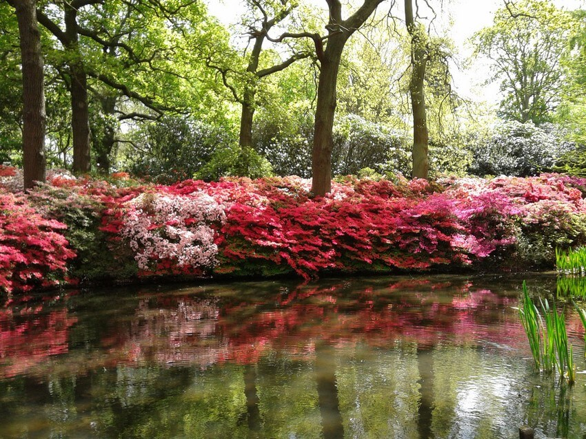 These 5 Magical Places Are London's Hidden Treasures for True Travelers | Richmond Park