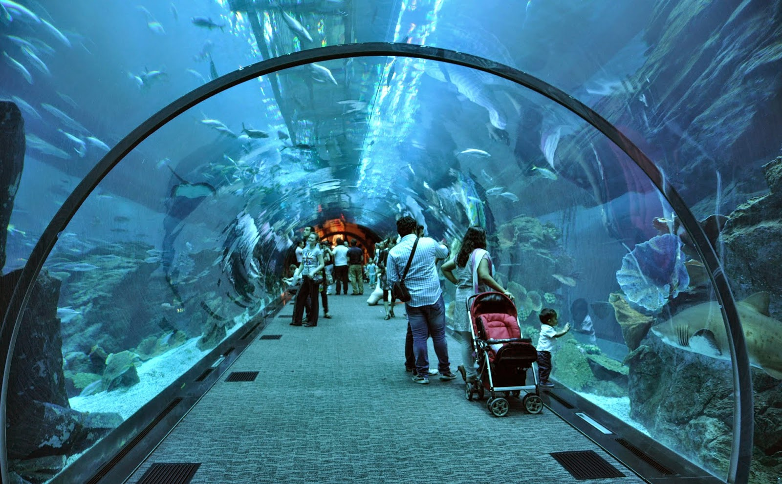 THE MOST LUXURIOUS MALL IN THE WORLD -THE DUBAI MALL; Dubai Mall Aquarium