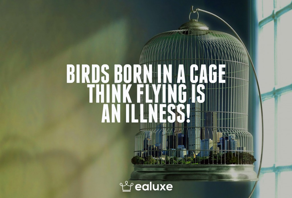 Ealuxe 100 quotes on motivation success overcoming obstacles and life get inspired (82) Birds born in a cage think flying is an illness!