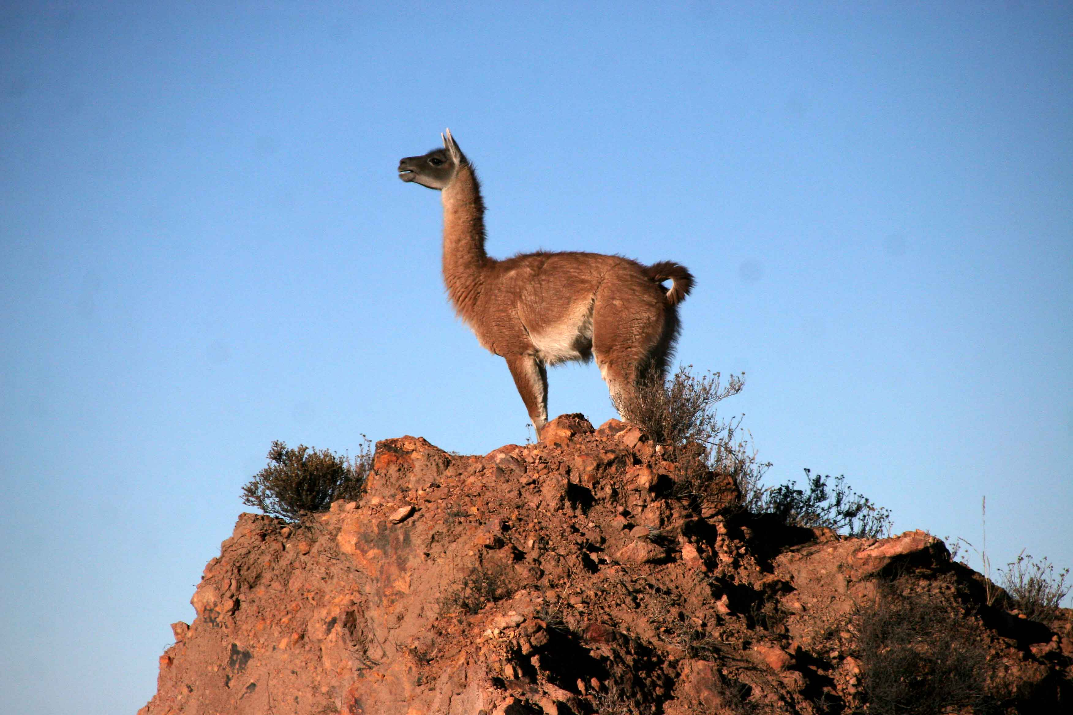 Finest fabric in the world; Vicuna