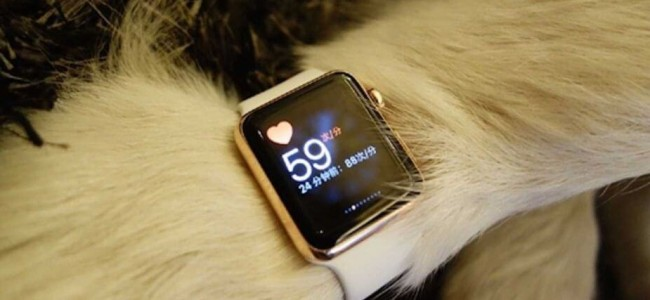He Bought Two Ultra-Expensive Gold Apple Watches for The Dog!