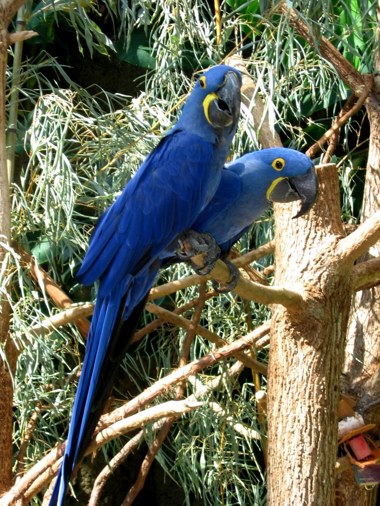 This is the Most Expensive Parrot in the World