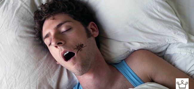 You Don't Eat Spiders In Your Sleep, You Eat Them In Your Everyday Food