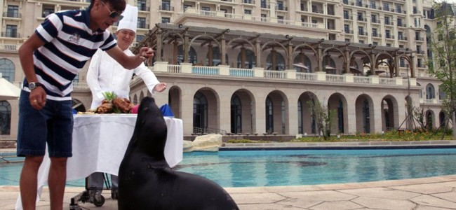 Guy Rents Entire Swimming Pool for his Pet Sea Lion Birthday At Five-Star Hotel