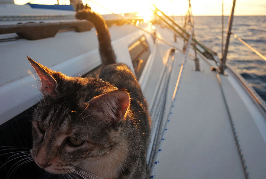 Meet The Couple Who Quit Everything And Started Traveling with Their Cat