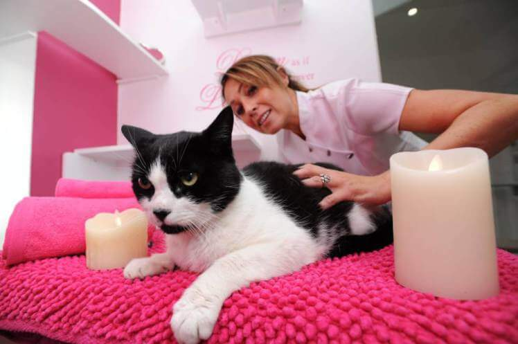 The Luxury Hotel for Cats Has Opened Its Gates In Yorkshire