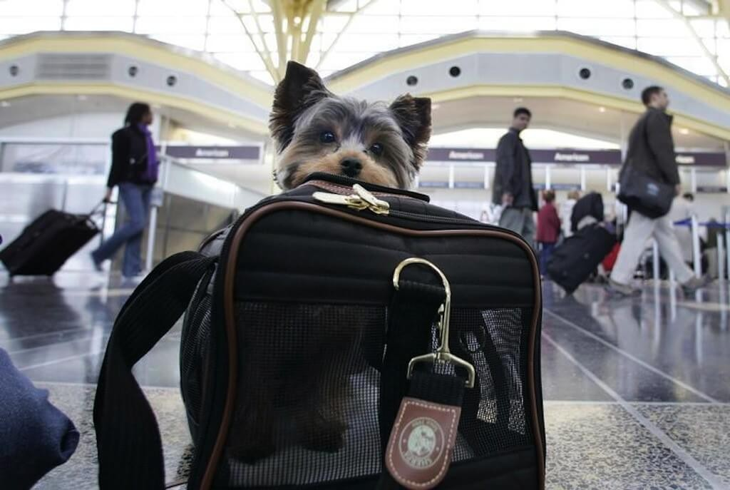 U.S. Will Have the First Airport Terminal Dedicated Just To Animals