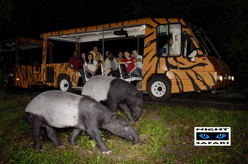 15 Things you Didn't Know about Singapore - Singapore Night Safari