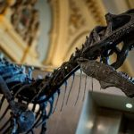 Dinosaur Skeleton Sells for Record €1 million at French Auction