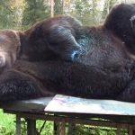 Juuso the Bear Debuts its Paintings that are Selling for $4280 at Finnish Art Gallery